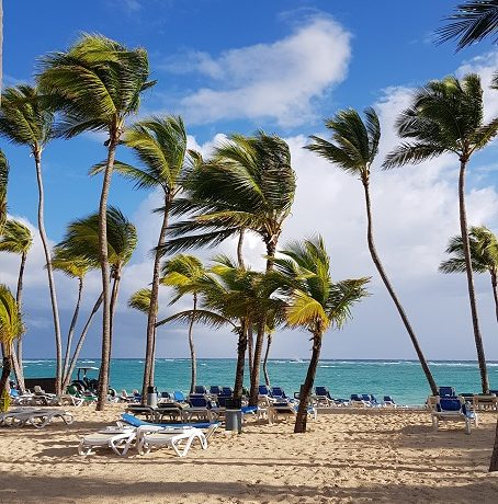 Dominikana, palmy, plaża