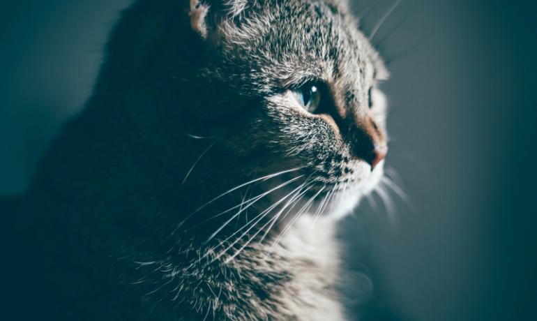 Jak podróżować z kotem?