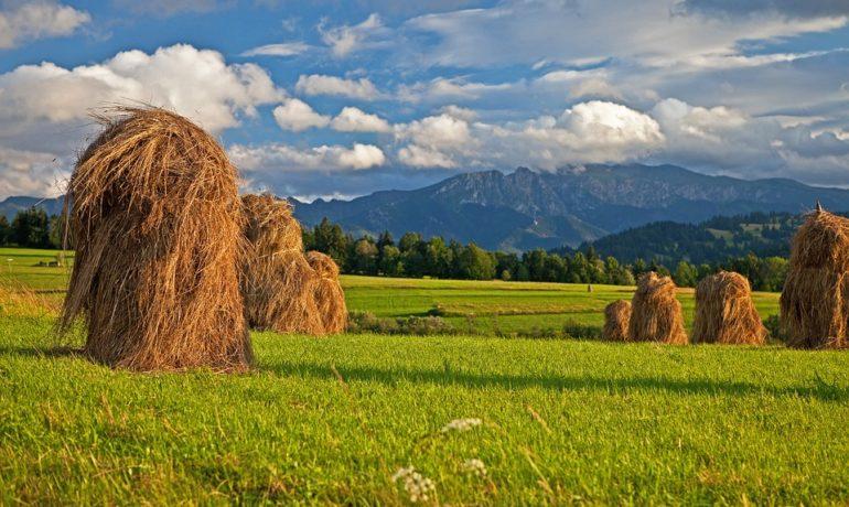 Agroturystyka - czym jest i dla kogo taki wypoczynek?