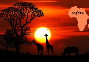 Co zabrać na safari, gdzie jechać?