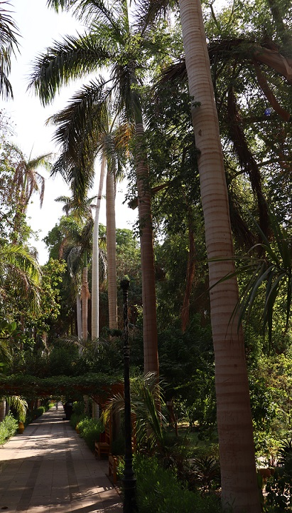 Egipt - ogród Kitchnera