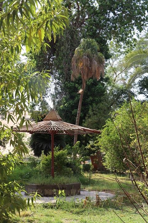 Egipt - ogród botaniczny Kitchnera