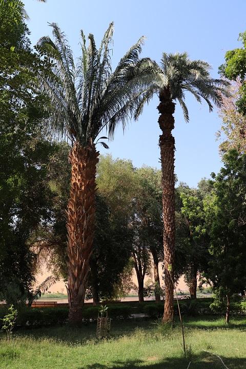 Egipt - ogród botaniczny na wyspie Kitchnera