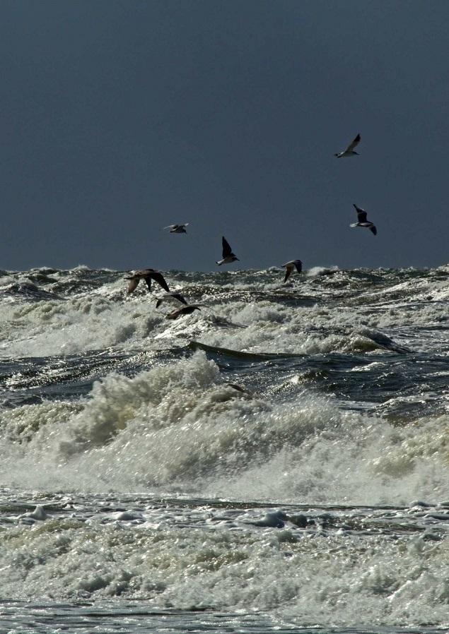 Morze, zima, ptaki