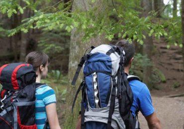 Spacer lub jazda po lesie